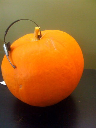 Chatty Gourd